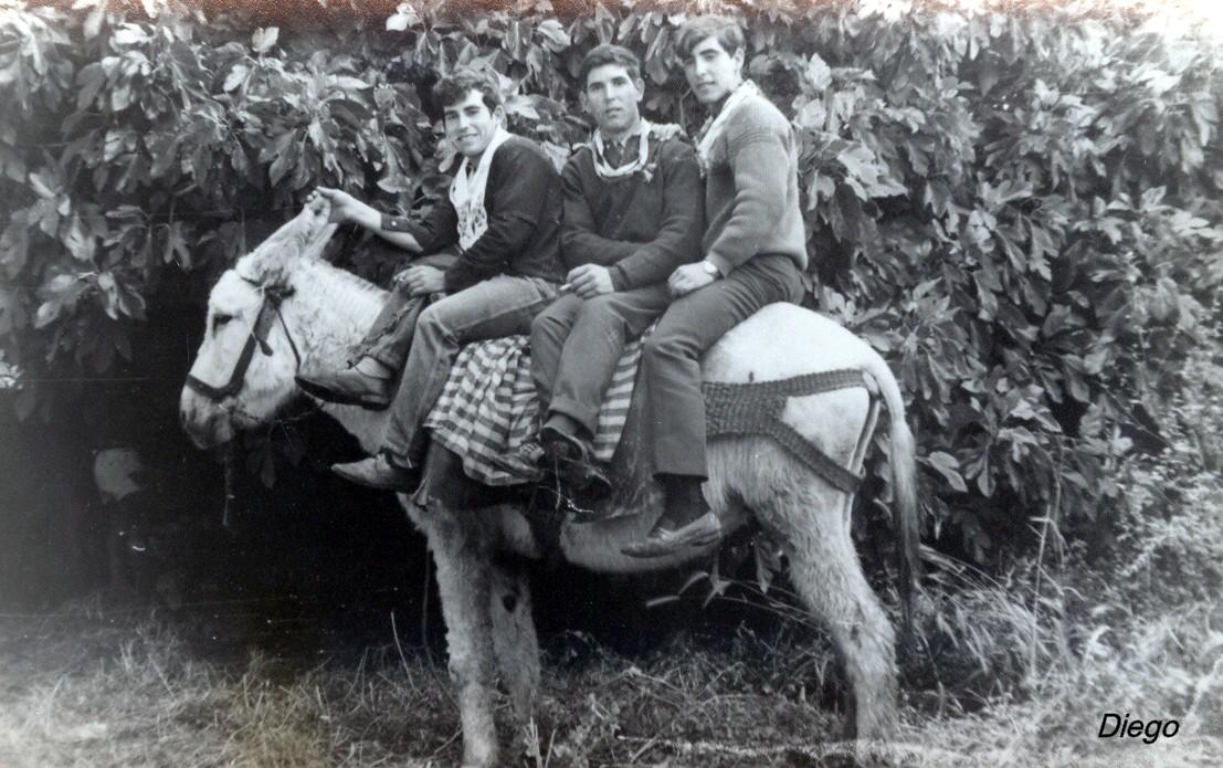tres en un burro