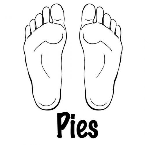 Pies (6)